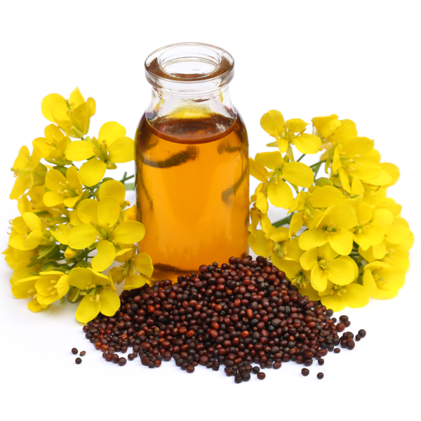 Mustard oil and olive oil